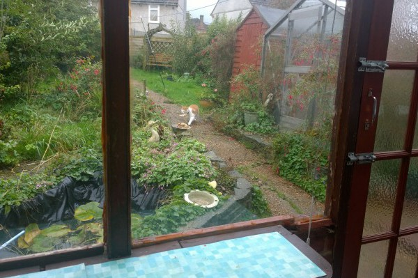 A view from our conservatory and the neighbours cat that comes to visit!
